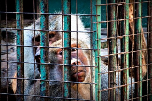Cierre del Zoológico de Córdoba: una decisión impostergable